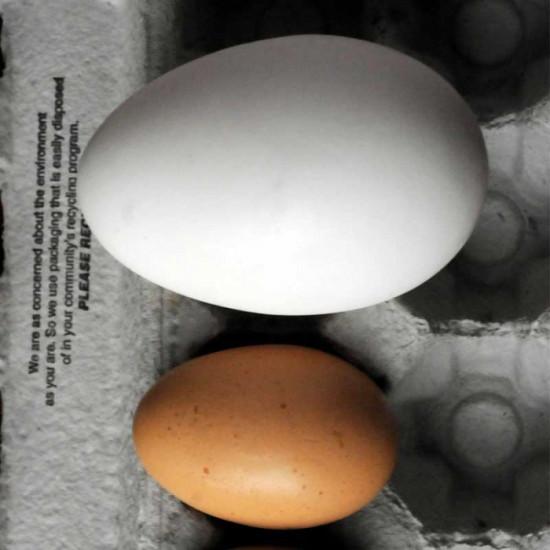 Kaz Yumurtası