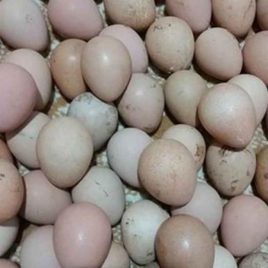 Beç Tavuk Yumurtası