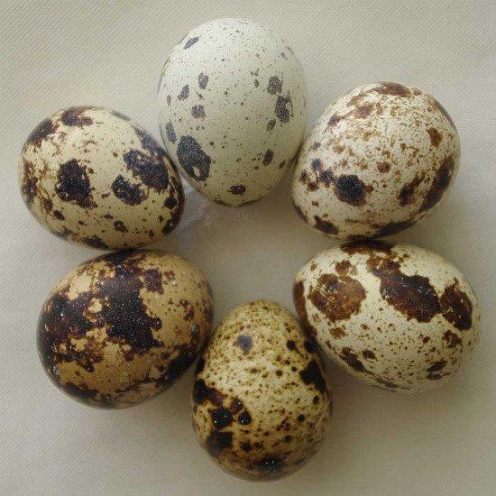 Bıldırcın yumurtası 12'li
